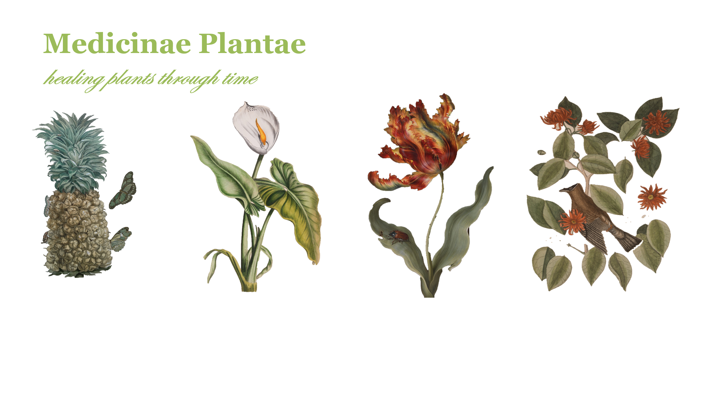 Medicinae Plantae: healing plants through time