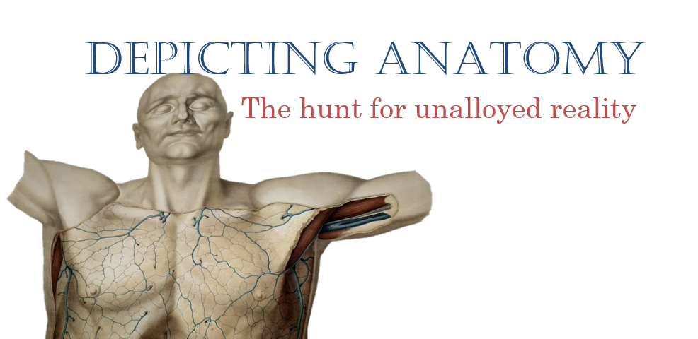 Depicting Anatomy: the hunt for unalloyed reality